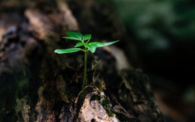 Sperand…visam, simtind…traim
